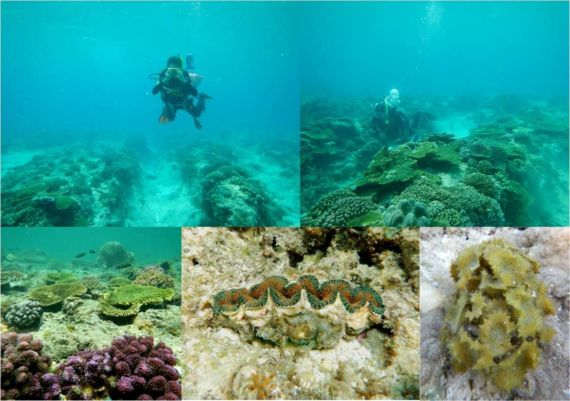東沙外環礁