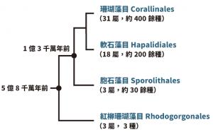 CCAphylogeny